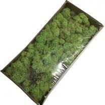 Ijslandsmos mintgroen, 80 gram