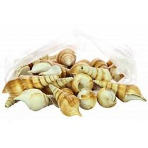 Schelpen eluthani brown poly naturel a 1kg