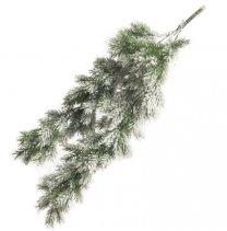 Pinus noblis tak met sneeuw, 68cm