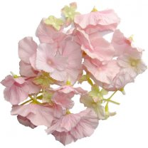 Lichtroze hortensia mix