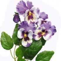 Paars-lila viooltjes mix, 25cm
