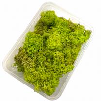 ijslandsmos Spring groen, Lente groen, 80 gram
