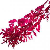 Gedroogde Ruscus Fuchsia