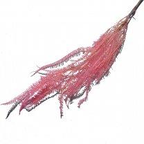 Helecho Varen Pink