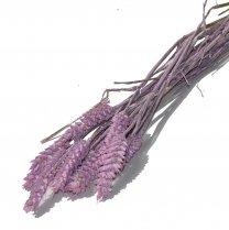 Triticum, Lavendel tarwe, 10 stelen