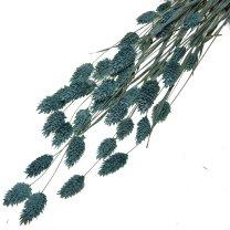 Gedroogde Phalaris Zeebries blauw, 50cm
