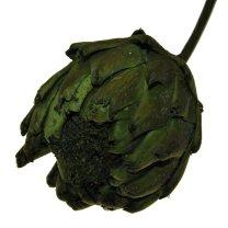 Gedroogde grote Artisjok groen, 30cm