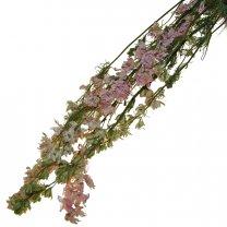 Gedroogde Delphinium Roze