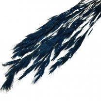 Festuca Kobaltblauw