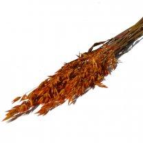 Haver, Avena Oranje, bundeltje van 10 stelen