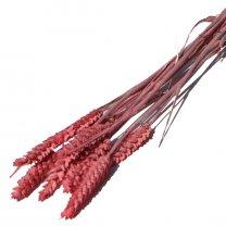 Triticum, Roze tarwe, 10 stelen