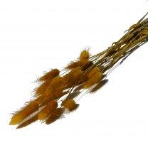 Hazenstaart, Lagurus Vintage geel