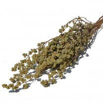 Oregano Naturel, 45cm