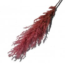 Pampasgras Oud-roze, 100cm