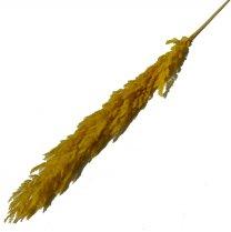 Pampasgras Vintage Geel, 100cm