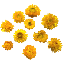 Gedroogde Helichrysum GEEL, losse bloemen, 10 stuks
