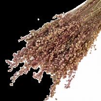 Briza Minima, Stargrass, zeegras Naturel-roze