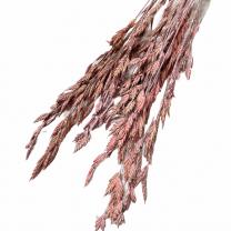 Bromusgras Oud-roze