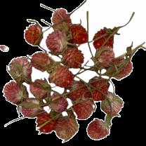 Losse bloemhoofdjes daisy abrikoos kleur, 24 stuks