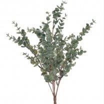 Bundel Eucalyptus Pulverantha, 46cm