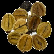 Jacaranda zaden groen, 35 gram