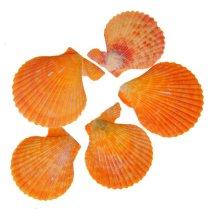 Pecan noblis, licht oranje tinten
