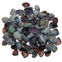 Cay Cay schelpen, purple of naturel 100 gram