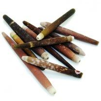 zee-egel pennen, 6cm