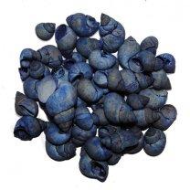 Blauw-grijze Umachi schelpen, 50 gram