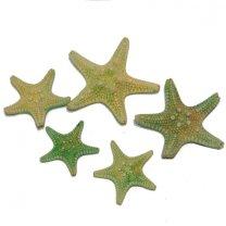 Lichtgroene zeesterretjes, 3cm