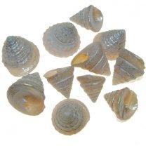Troca pearl mini, 50 gram