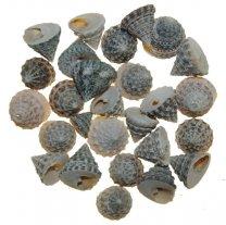 Echinelopsie naturel, 50 gram
