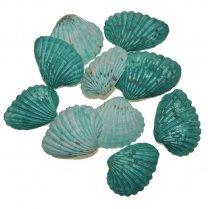 Turqoise-groene schelpen, chippie, 3-4cm, 10 stuks
