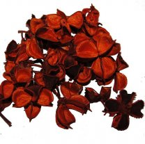 Oranje cotton pods, 25 gram