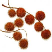 Oranje-brons plataanballetjes