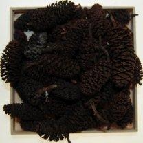 Birchpine naturel, 50 gram