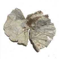 sponge mushrooms white-wash, 3 stuks