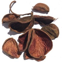 Landlotus losse bladeren naturel, 10 stuks