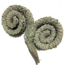 Palm male licht olijfgroen, 10cm