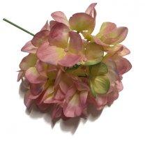 Hortensia bloem roze