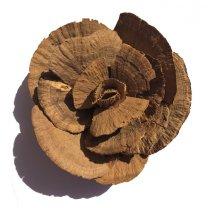 sponge mushrooms bloem, 12cm