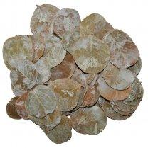 Moneta Frosted, 15 gram