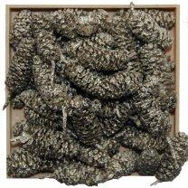 Birchpine platina, 50 gram