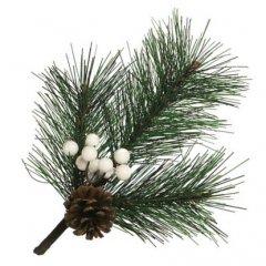 Pinus Strobus takje met witte bessen, 24cm