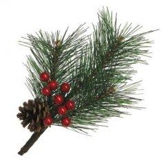 Pinus Strobus takje met rode bessen, 24cm