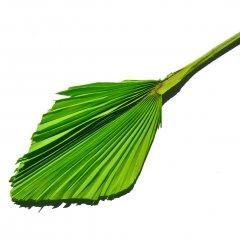 Palm Spear Appelgroen