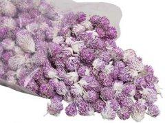 Losse bloemhoofdjes Purple daisy, 24 stuks