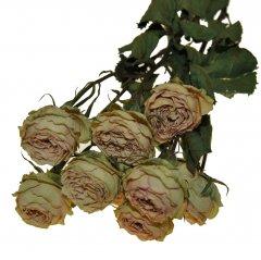 Gedroogde roosjes Oud roze, 45cm