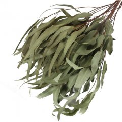Eucalyptus Leaves Natural 50cm
