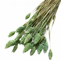 Phalaris Mint groen, 50cm